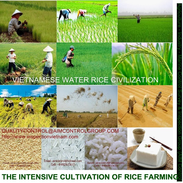 Rice Quality and Quantity Control Inspection - 01